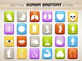 stock photo of autopsy  - Human anatomy website icons set - JPG
