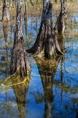 stock photo of tillandsia  - Landscapes in Everglades National Park - JPG