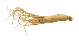 picture of ginseng  - Ginseng root isolated on a white background - JPG