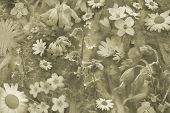 stock photo of cowslip  - Pretty wild flowers montage in sepia - JPG
