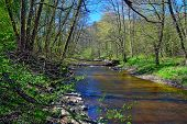 picture of spring break  - Spring on the little forest river - JPG