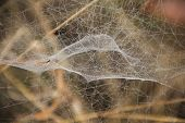picture of cobweb  - macro close up background jungle cobweb trap - JPG