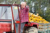 stock photo of tractor trailer  - Senior man standing in tractor cabin towing a trailer with corn cobs - JPG