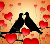 picture of adoration  - Love Birds Showing Affection Loving And Devotion - JPG