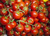 picture of farmer  - Group of freshly picked tomatoes at farmers market - JPG