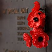 picture of battle  - Red poppy to honour veterans in the World War - JPG