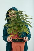 stock photo of hoodie  - Portrait of a man in hoodie holding flowerpot with cannabis plant - JPG