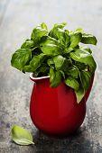picture of jug  - Fresh basil in red jug - JPG