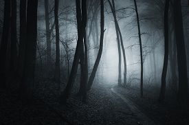 picture of scary haunted  - Dark road in mysterious haunted scary forest with fog - JPG