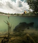picture of freshwater fish  - Split shot of the freshwater pond with fisherman above the surface and big fish  - JPG
