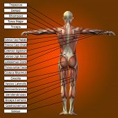 picture of male body anatomy  - Concept or conceptual 3D male or human anatomy - JPG