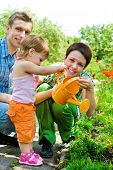 stock photo of family fun  - Family watering flowers in the garden - JPG