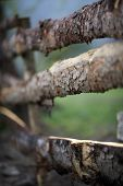 stock photo of log fence  - close - JPG