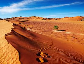 foto of sahara desert  - Single tree in Sahara Desert - JPG