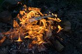 Close Up Of Burning Campfire In Summer Evening, Burning Logs In Fire. poster