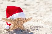 Close Up Of Starfish In Beach Sand Wearing Red And White Furry Christmas Santa Hat poster