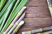 Close up sugarcane on wood background close up