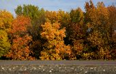 Golden Autumn In Central Russia. Autumn Trees Lit By Sunshine - Sunny Autumn Landscape In Bright Sun poster