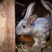 image of rabbit hutch  - Young rabbits popping out of a hutch  - JPG