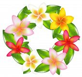 picture of plumeria flower  - Garland Of Colorful Fragipani - JPG