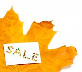 Autumn Yellow Maple-leaf And Price Card With Word Sale Composed Of Autumnal Maple Leaves. Isolated O poster
