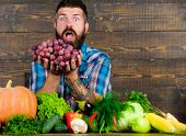 Farmer With Homegrown Harvest On Table. Farmer Proud Of Harvest Vegetables And Grapes. Man Bearded H poster