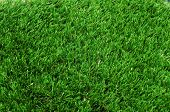background made of closeup of grass