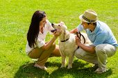 foto of labrador  - Young happy couple playing with Labrador dog smiling in park - JPG
