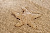 closeup of a paper-mache seastar on the sand
