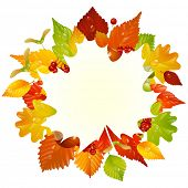 stock photo of glans  - Vector autumn frame with fall leaf - JPG