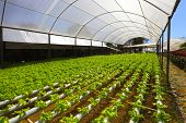 stock photo of hydroponics  - planting hydroponics - JPG