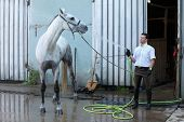 picture of wet pants  - jockey wash horse from hose near stable - JPG