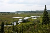 image of denali national park  - View from a trail in Alaska - JPG