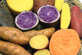image of solanum tuberosum  - Many different varieties of potatoes - JPG