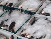stock photo of mullet  - Large crates with grey mullet fish ready for transport - JPG