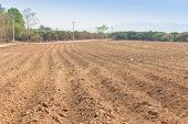image of cassava  - Cassava planting area or cassava farm field - JPG