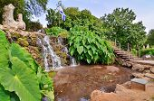 "picture of oasis  - A wide-angle view of an oasis of waterfall pond and ""Elephant Ear"" plants in a kibbutz in Northern Israel with the Israel flag in the background. Water is pumped from the nearby Jordan River.