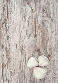 picture of rude  - Seashells on the old rude wooden background - JPG