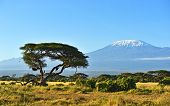 picture of kilimanjaro  - Mount Kilimanjaro in the African savannah in Kenya - JPG