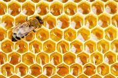 stock photo of honeycomb  - working bee on honeycomb cells close up - JPG