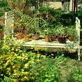 pic of english cottage garden  - White vintage bed with flower pots in the old summer garden - JPG