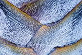 pic of indigo  - Geometric Angles of Nature in the Bark of a Palm Tree With Purple - JPG