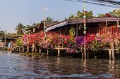foto of street-rod  - beautiful pink potted flowers in a thai countryside village in the province of Ratchaburi - JPG