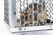 foto of mouse trap  - rat in the cage trap in white background - JPG