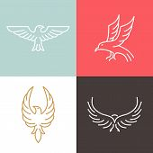 stock photo of falcons  - Vector eagle and falcon linear logo design templates  - JPG