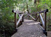 stock photo of redwood forest  - Wooden Footpath Bridge Big Basin Redwoods State Park  - JPG