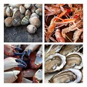 stock photo of crustaceans  - Various shells and crustaceans on a collage - JPG