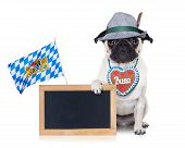 stock photo of pug  - pug dog dressed up as bavarian with gingerbread as collar isolated on white background holding a blank empty blackboard or banner with a bavaria flag - JPG