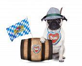 image of pug  - bavarian german pug dog behind beer barrel and bavarian flags isolated on white background - JPG