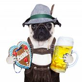stock photo of ginger bread  - pug dog dressed up as bavarian with gingerbread as collar isolated on white background holding a beer mug and a ginger bread heart - JPG